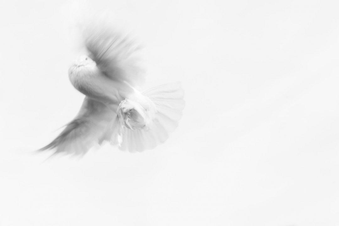 White Wings of Gulf Winds